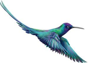 Green purple and blue humming bird mid flight